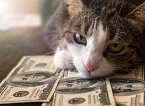 Financial Troubles